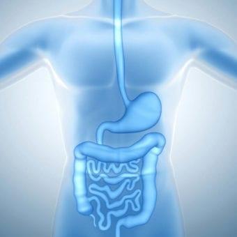 Meddi.gastroenterología. dra. karla leonher - imagen del sistema digestivo