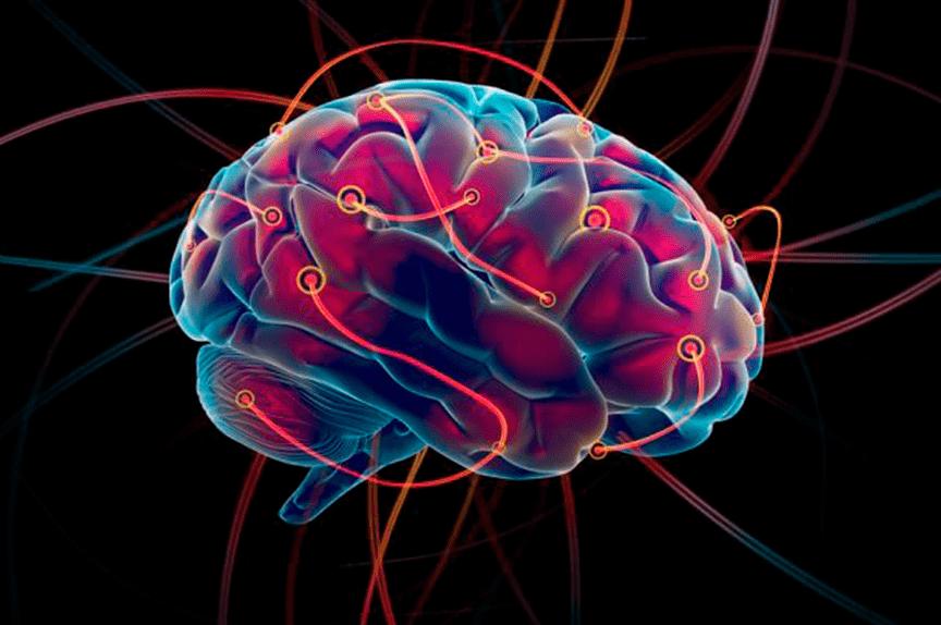 Meddi-Dr-Roberto-Riestra-Blog-Craneo-y-cerebro-min